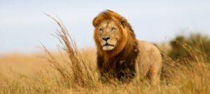 Kenya Lodge Safaris